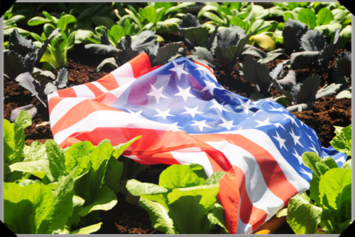 The wind-toppled US flag in the White House Garden replica at Bloom