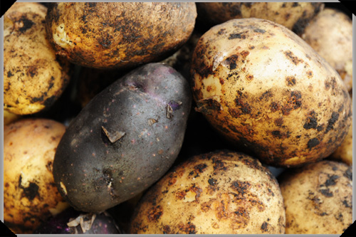 purple and white potatoes