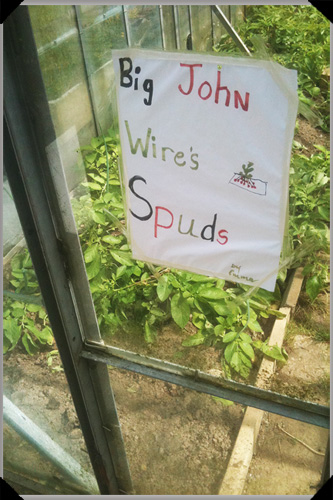 Big John Wires Spuds