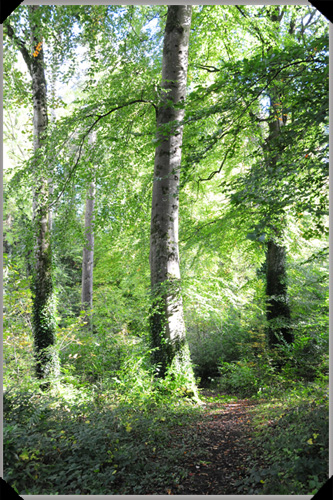 Woodland at Farnham Estate