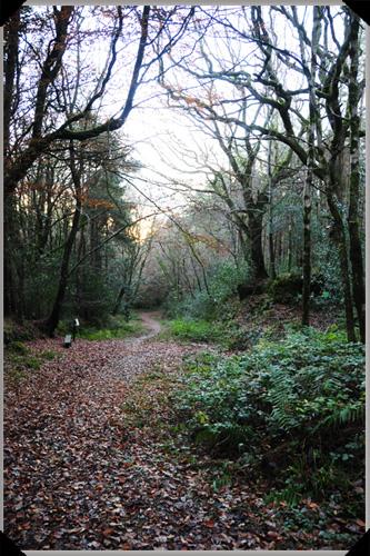 Glen of Aherlow Walking Trail