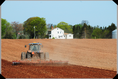 Tractor ploughing, PEI