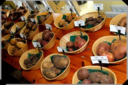 potato display