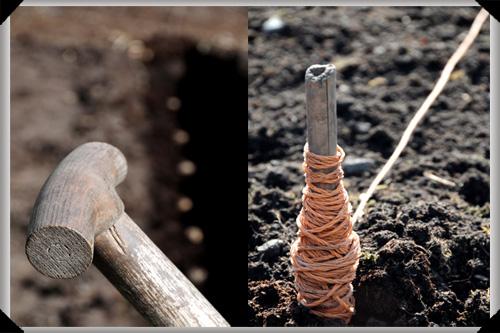 Tools of the potato planting trade