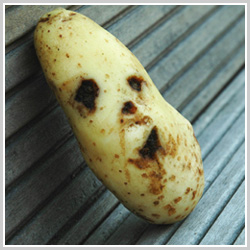 The Daily Spud Mascot