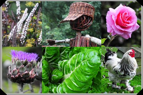 Around the Ballymaloe cookery school gardens