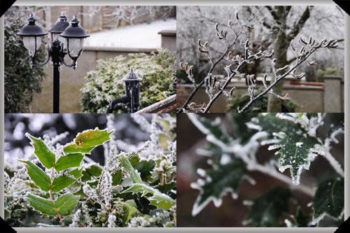 Frosty Christmas Morning