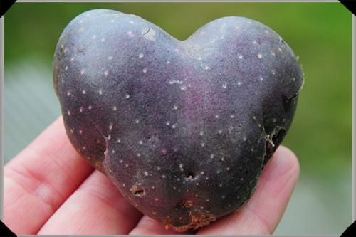 Purple heart-shaped potato