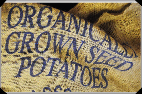 Organically Grown Seed Potatoes