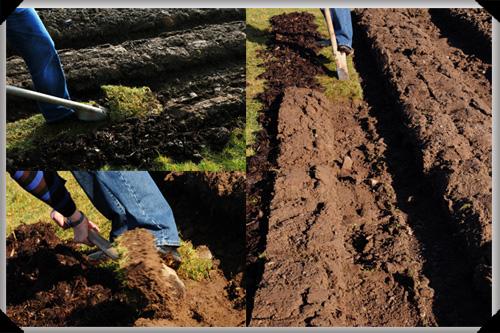Digging Lazy Potato Beds
