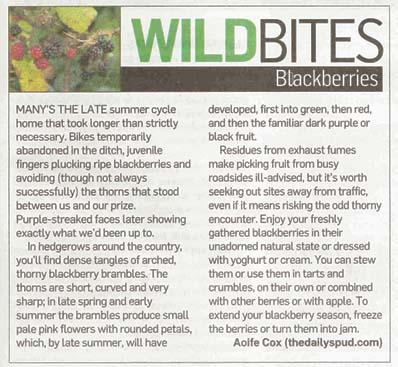 Blackberries in The Irish Times