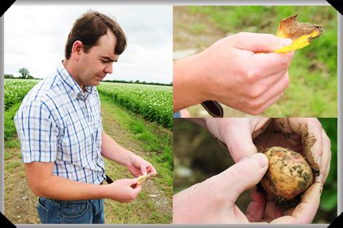 Barry examines the potato crop