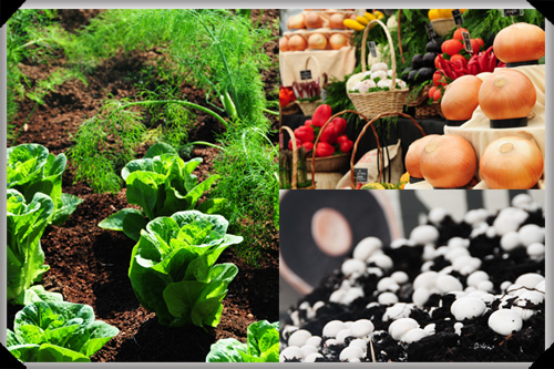 Vegetables at Bloom