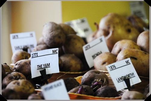 Heritage potatoes