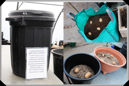 Potato planting containers
