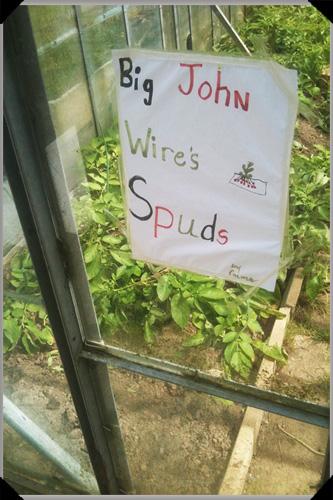 Big John Wires Spuds