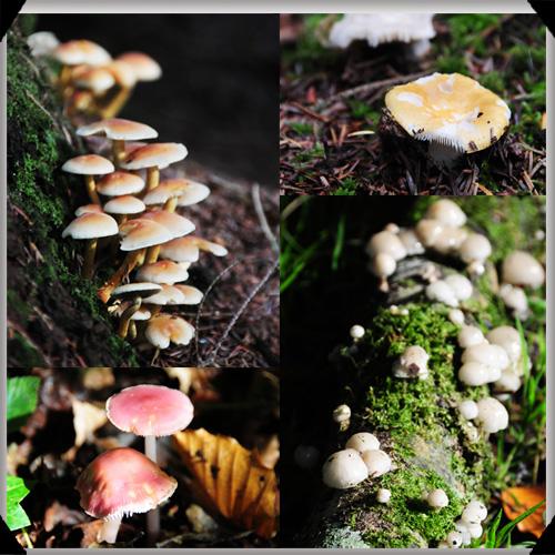 Mushrooms at Farnham Estate
