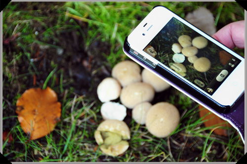 Puff ball mushrooms on the iphone