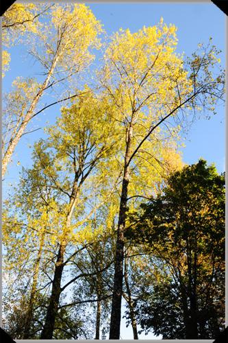 Trees at Farnham Estate