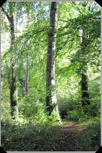 Woodland at Farnham Estate