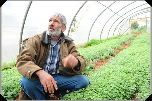 Abu Kassem polytunnel
