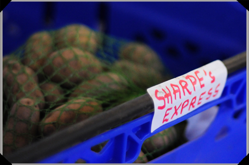 Sharpe's Express seed potatoes