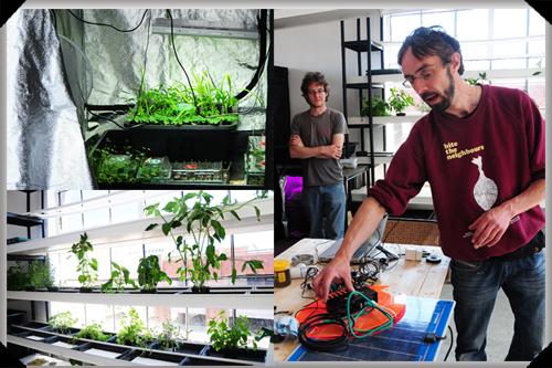 In the Dublin Urban Farm lab