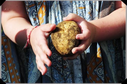 Little girl holds a potato