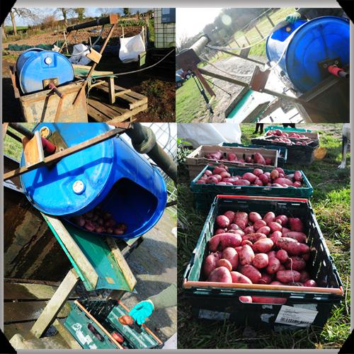 Potato washing