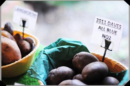 Daves All Blue Potato